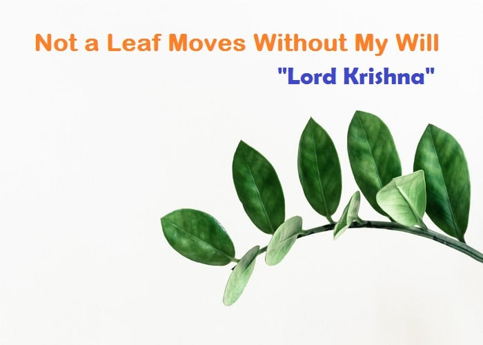 Krishna Quotes Not a Leaf Moves Without My Will